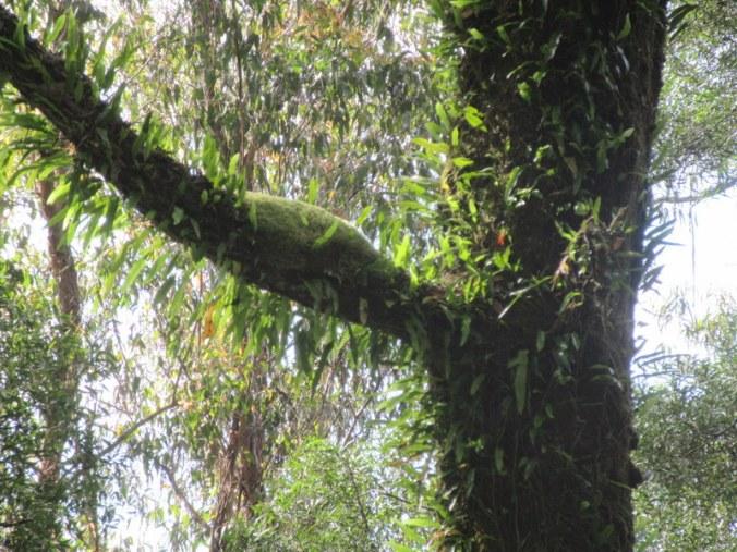 Turton's Track trees 2