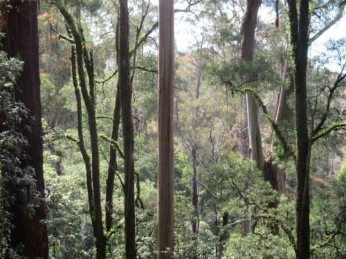Turton's Track trees 3