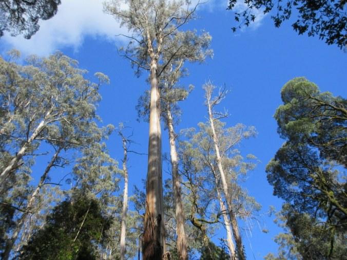 Turton's Track trees 4