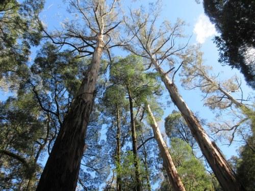 Turton's Track trees 5