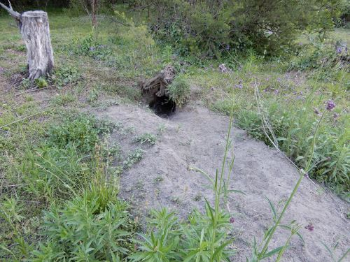 Wombat den
