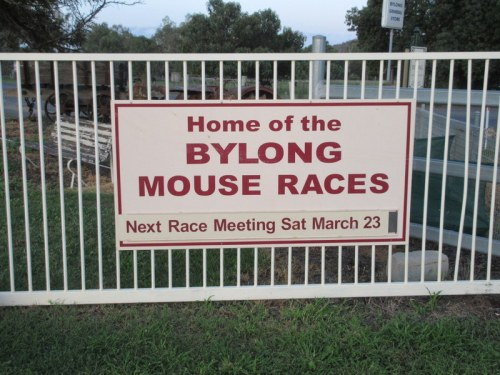 Bylong mouse races