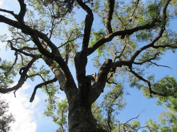 Cmp tree