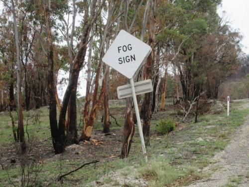 No fog