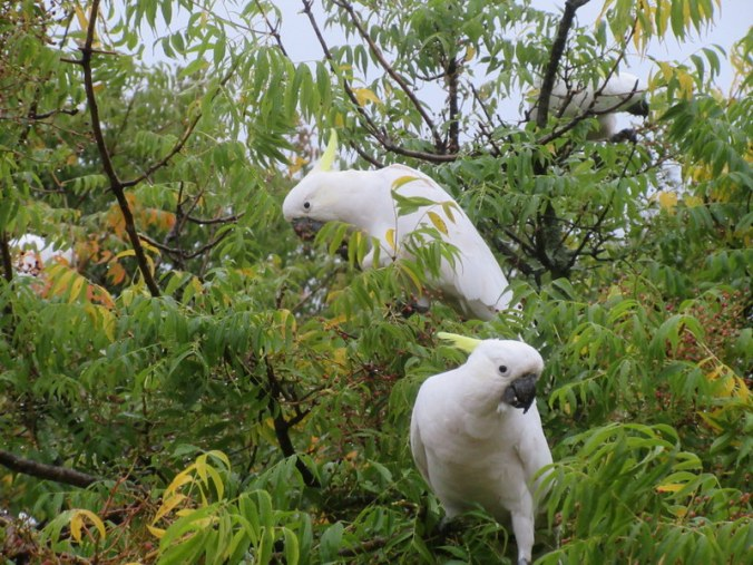 YHA Birds - wild and cheeky