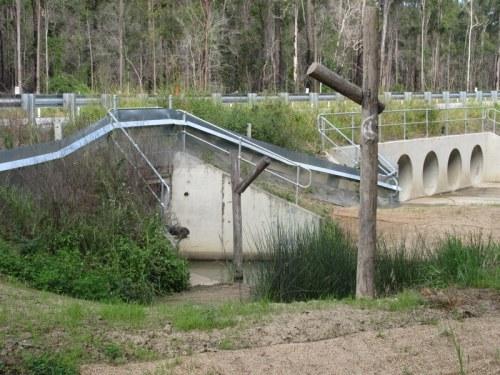 Koala proff fence 1