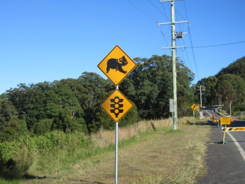 Kolala stop light, we didn't see any koala