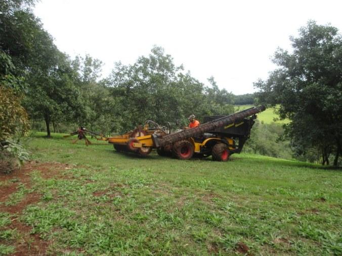 Macadamia orchard harvest