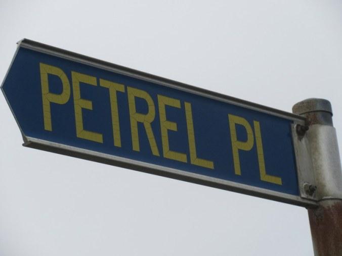 pertel or petrel