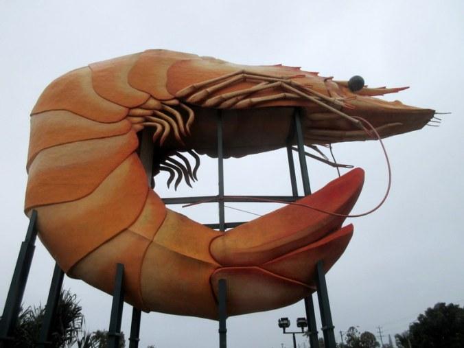 The big prawn 1