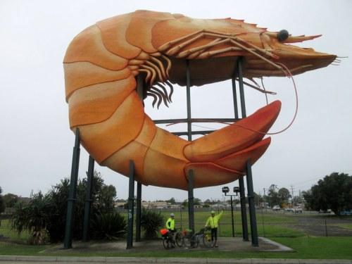 The big prawn 2