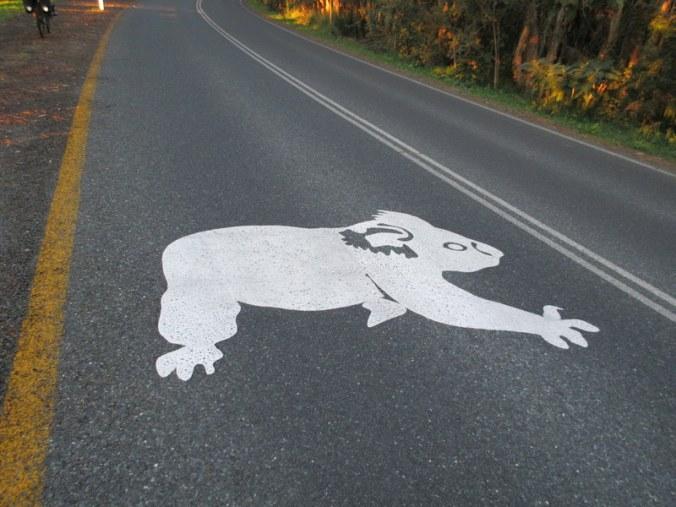 Warning - koalas about