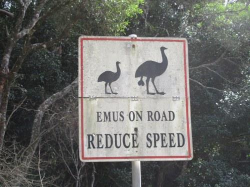 Emu - not seen 1