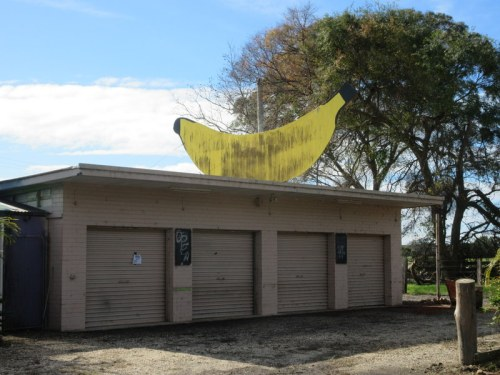 Not the big banana